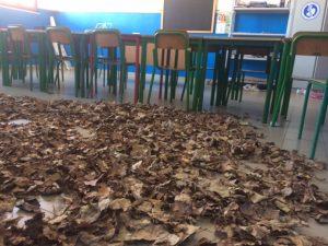 distesa di foglie autunno